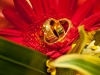 wedding-rings-on-flower