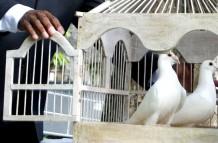 White Dove Releases