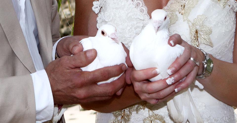 Caribbean Wedding - White Doves