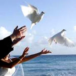 Barbados Wedding White Doves